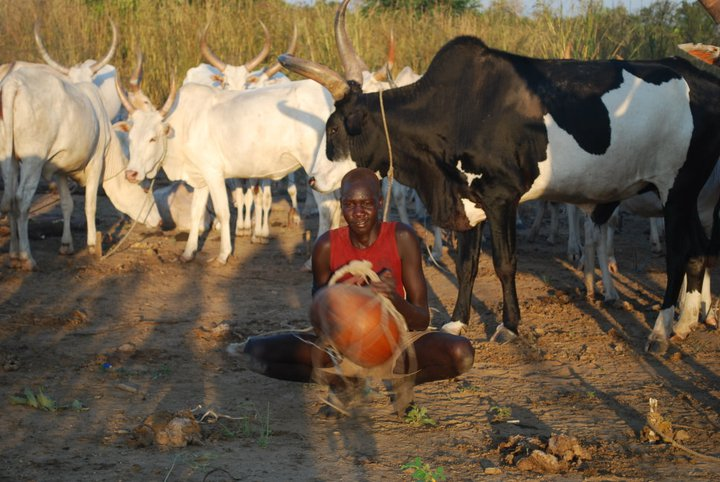 Cattle Used For Dowries For Child Marriage In South Sudan